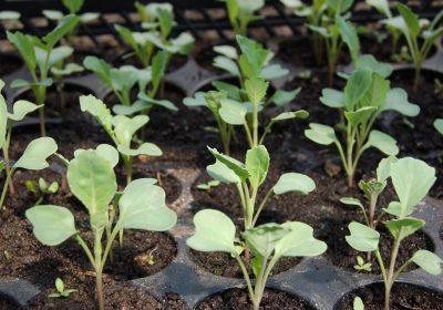 seedling-1386653_1920